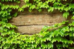 Altes hölzernes mit grünem Blumenfeld Stockfotografie