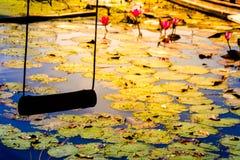 Altes hölzernes Schwingen Beautyful auf Lotosfeldhintergrund Stockbild