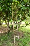 Altes hölzernes Treppenhaus und Baum Stockfotos
