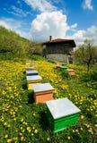 Altes Haus und Bienenhaus Stockfotografie