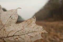 Altes Herbstblatt auf dem Hintergrund des Waldtraurigen Herbstfotos Lizenzfreie Stockfotografie