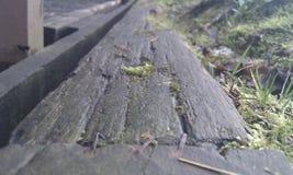 Altes Holz Stockfotos