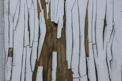 Altes Holz des Hintergrundes und gebrochene Farbe Lizenzfreies Stockbild
