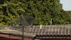 Altes Holzhaus-Dach lizenzfreie stockfotos