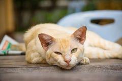 Altes Katzenschlafen lizenzfreie stockbilder