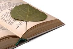 Altes Kochbuch und trockenes Blatt Stockbilder