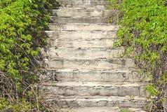 Altes konkretes Treppenhaus überwältigt mit Trauben Stockfoto