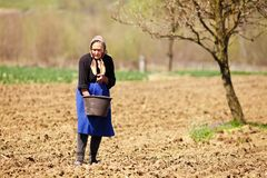 Altes Landwirtfrauensäen Stockbild