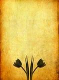 Altes Papier mit Bild der Tulpe und des Platzes Stockfotos