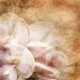 Altes Papier mit Blumenmuster stockbilder