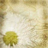 Altes Papier mit Blumenmuster lizenzfreies stockbild