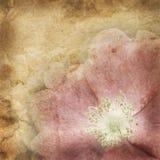 Altes Papier mit Blumenmuster lizenzfreie stockbilder
