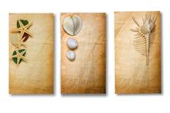 Altes Papier mit Seashells Stockfotos