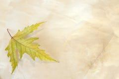 Altes Papier mit trockenem Herbst-Ahornblatt Stockfotografie