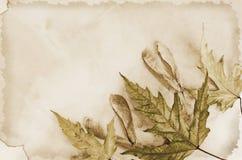 Altes Papier mit trockenem Herbsturlaub Lizenzfreies Stockbild