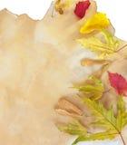Altes Papier mit trockenen Herbstblättern Lizenzfreie Stockfotos