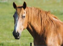 Altes Pferd stockbilder