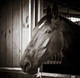 Altes Pferden-Portrait Lizenzfreies Stockfoto