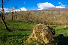 Altes rockwith Moos im grünen Hügel mit Bäumen Lizenzfreie Stockfotografie