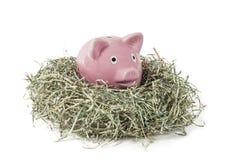 Altes Sparschwein in zerrissenem Papiergeld-Dollar-Nest Stockbilder