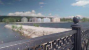 Altes Spinnennetz mit dem festen in ihm Zuckmücken auf dem Hintergrund der neuen fünfstöckigen Häuser im defocus stock video footage