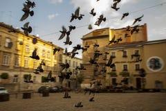 altes Teil der fliegenden Vögel der europäischen Stadt stockfotografie