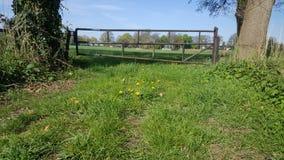 Altes Tor, das das zu eine Rasenfläche führt stockfoto