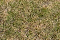 Altes und neues Gras Stockfotos