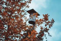 Altes Vogelhaus und gelbe Blätter lizenzfreies stockfoto