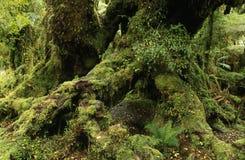 Altes Wachstum-Wald Stockbild