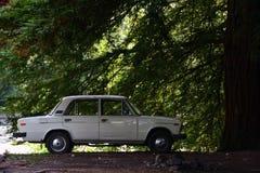 Altes weißes Auto steht nahe einem Baum stockbild