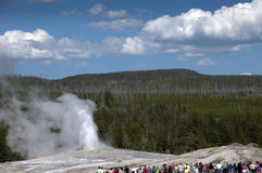 Altes zuverlässiges Geysir inYellowstone Nationalpark USA Lizenzfreie Stockbilder