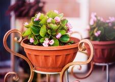 Altfiol i dekorativ blomkruka arkivbilder