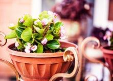 Altfiol i dekorativ blomkruka royaltyfria bilder