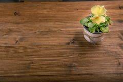 Altfiolpenséen blommar på träbakgrund Royaltyfria Bilder