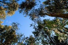 Alti alberi Immagine Stock Libera da Diritti