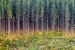 Alti alberi Fotografie Stock