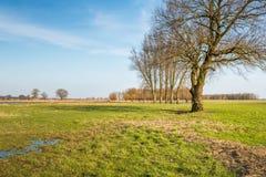 Alti alberi nudi sul terreno alluvionale di un fiume Immagini Stock Libere da Diritti