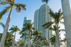 Alti condomini di aumento di Miami Fotografia Stock Libera da Diritti