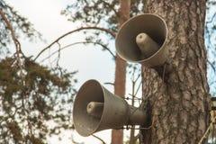 Altifalante no tronco de árvores coníferas no outono foto de stock royalty free
