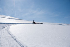 Altijd omhoog. Dogsled en skiër in het hele land stock foto