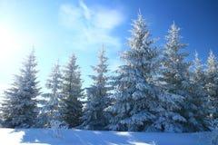 Altijdgroen bos in de winter stock afbeeldingen