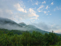 Altijdgroen Forest Overview in Adygea stock foto
