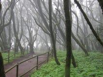 Altijdgroen regenwoud stock foto