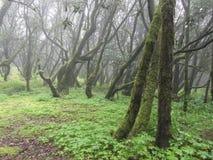 Altijdgroen regenwoud stock fotografie