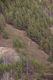 Altijdgroene bomen op de heuvelige Bank stock afbeelding