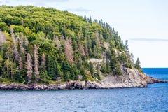 Altijdgroene Bomen op Steil Rocky Coast Stock Afbeeldingen
