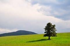 Altijdgroene boom en stormachtige hemel Stock Fotografie