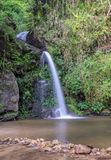 Altijdgroene boswaterval Royalty-vrije Stock Foto