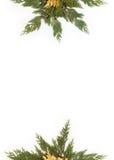 Altijdgroene die bladeren in stervorm worden geschikt op wit wordt geïsoleerd Royalty-vrije Stock Afbeeldingen